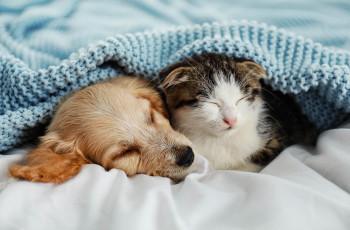 Furry buddies