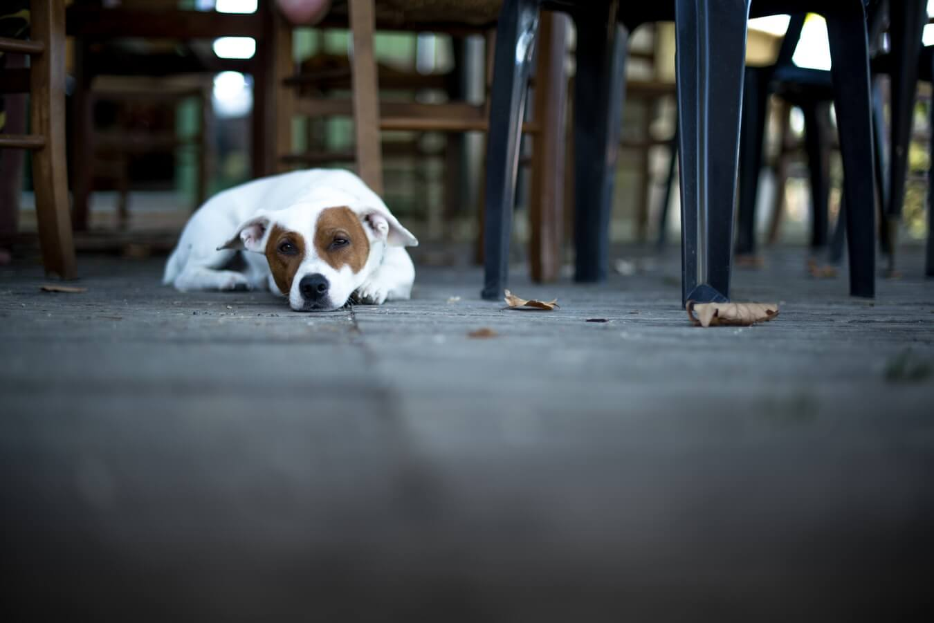 Pups that don't behave can cause problems at a restaurant
