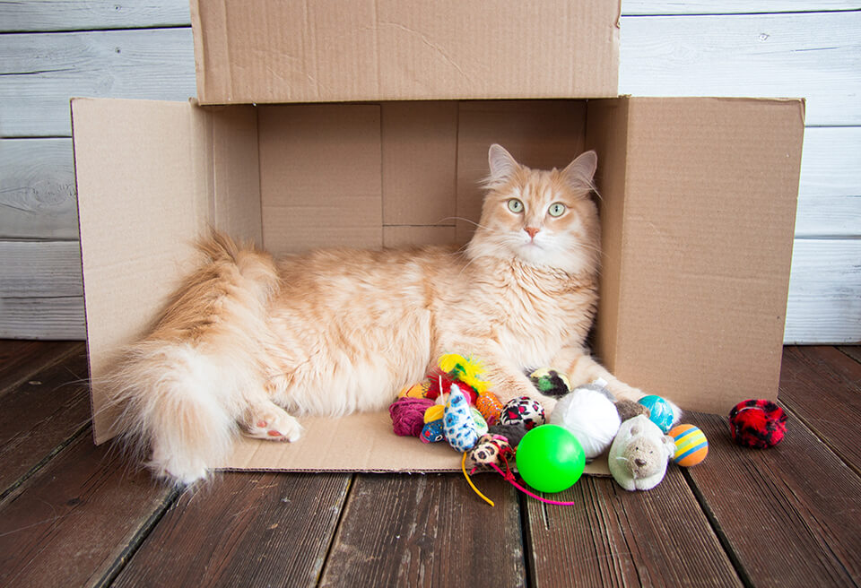 Shelter your animal from all the relocation fuss going on in the house.