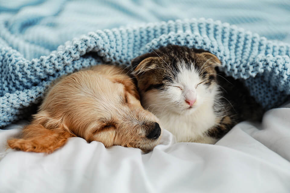 We are here to help with tips on how to move with pets.