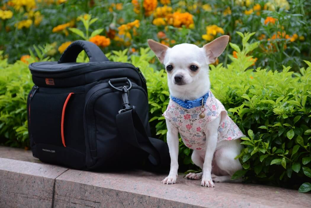 Your pup needs its own bag during travel.