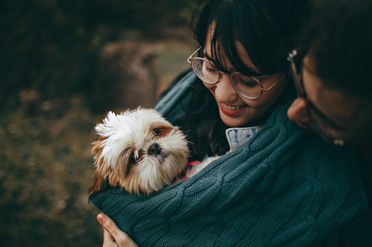 A dog in a scarf