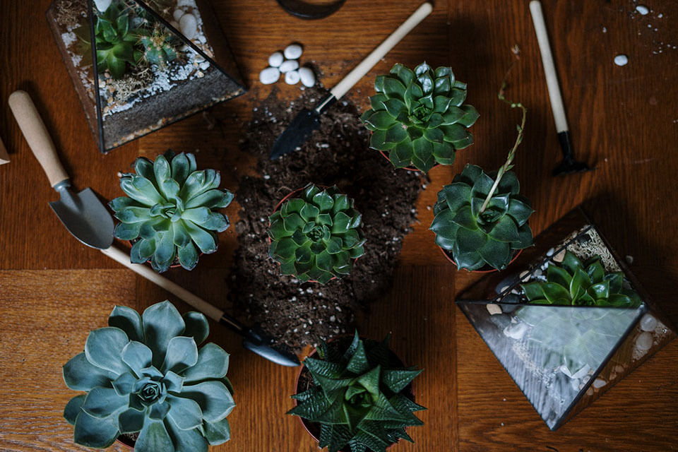 Plants on a brown wooden table