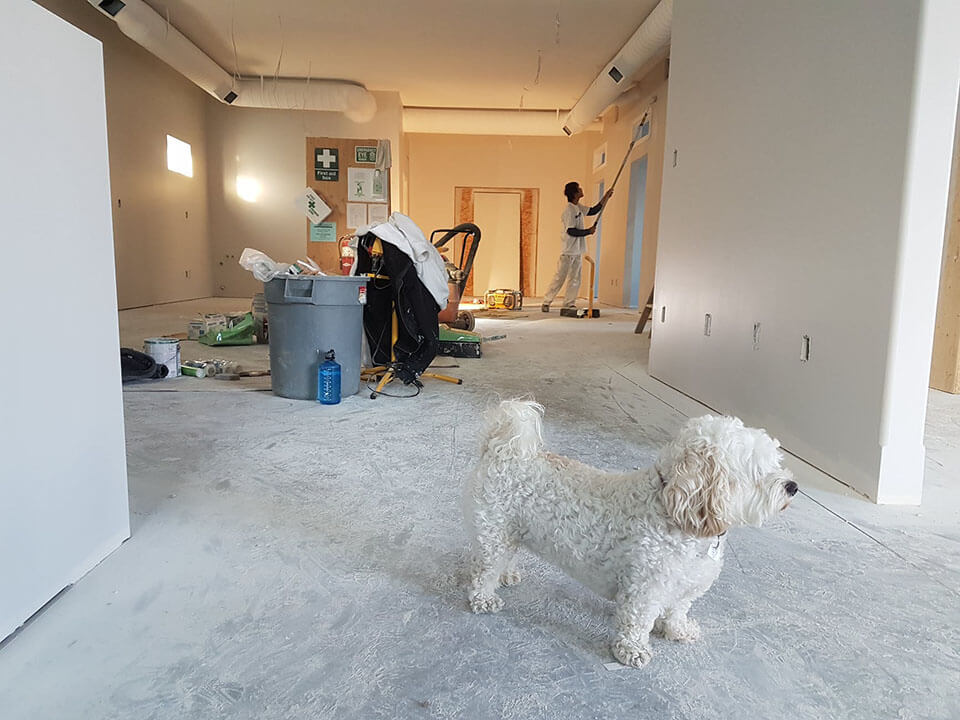 Man painting with dog in a room after the moving company has left