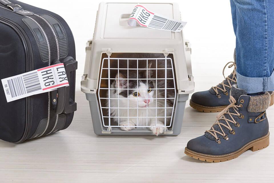 A cat inside of a carrier box