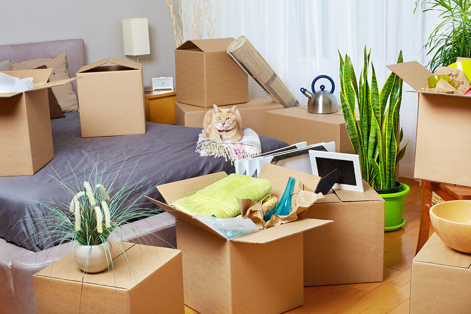 A cat sitting in a room full of packed items