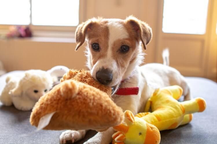 A puppy surrounded by toys