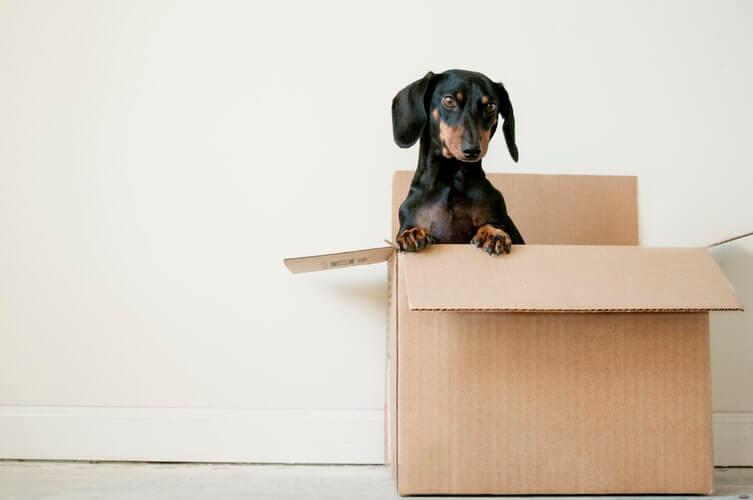 A black canine in a carton box