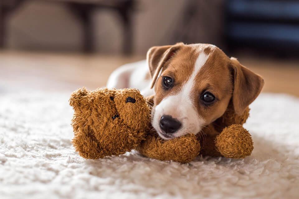 A puppy leaning on a teddy bear
