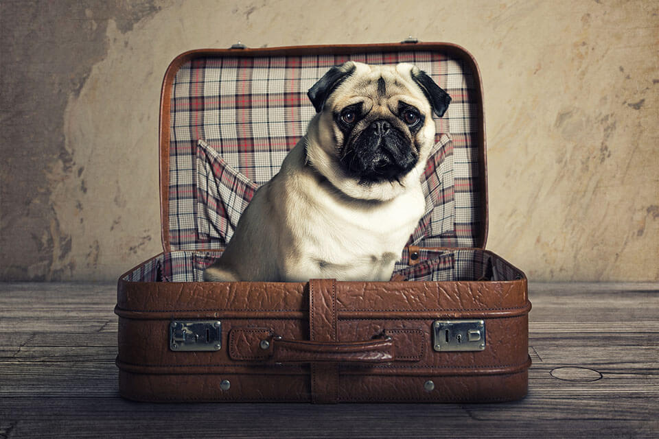A mops sitting in the suitcase